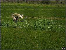 Cuban farmer south of Havana, 2 April 2008