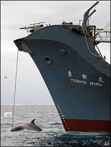 Japanese whaling ship, file image