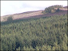 Kielder Forest (courtesy FreeFoto)