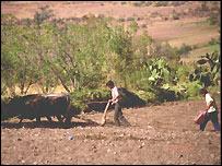 Agricultores peruanos