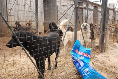 Собаки и корм