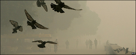 Birds fly over a street in Buenos Aires 18 April