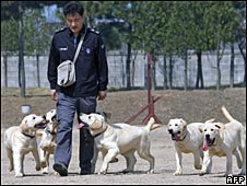 Police officer walking with cloned labrador puppies, 17/04