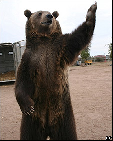 Rocky the bear