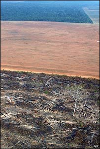 Foto área tomada por Greenpeace de áreas deforestadas de Amazonia
