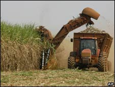 Sugar cane harvest in Brazil