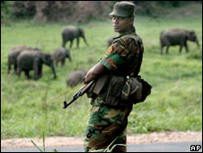 A Sri Lankan Home Guard stands on a highway with wild elephants in the background