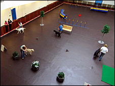 Guide dog indoor training hall