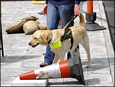 Guide dog on outdoor obstacle course