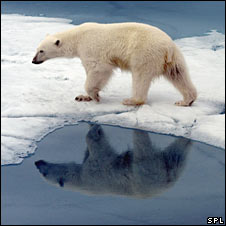 Polar bear. Image: Science Photo Library