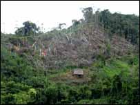 Deforestaci�n producto del cultivo de coca.