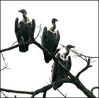 (Foto: Sociedad Zoológica de Londres)