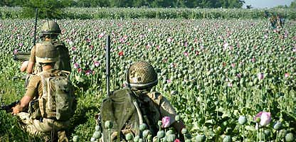 Soldiers in poppy field
