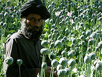Afghan national in poppy field
