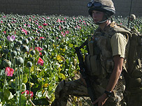 Soldier in poppy field