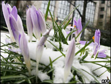 Crocuses. Image: AFP/Getty