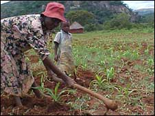 Zimbabwe subsistence farmer