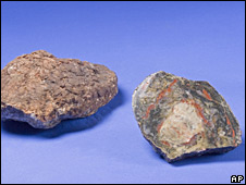 Coprolite, or fossilised dinosaur dung