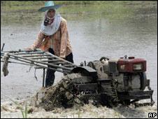 A Thai farmer working in a paddy field