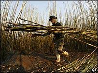 Trabajador azucarero en Brasil