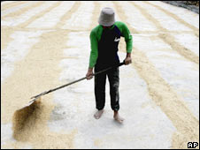 Rice production in Indonesia