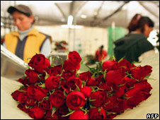 Two women prepare bunches of roses in a nursery in Ecuador