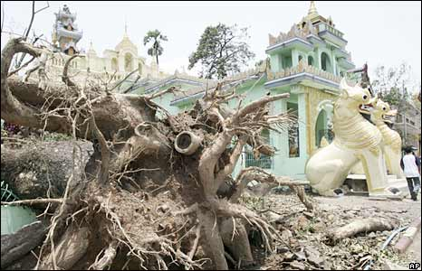 A fallen tree near a pagoda in Rangoon on 6 May 2008