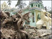 Árbol caído cerca de un templo