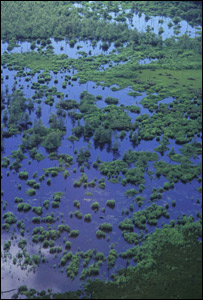 Guyana francesa. Foto: Roger Legen. WWF.