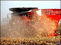 Cosecha de maíz en Estados Unidos