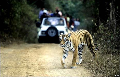 Royal Bengal Tiger at Ranthambore, July 2002