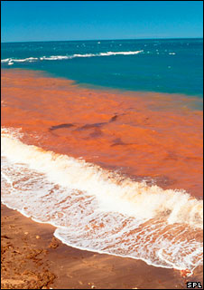 Red tide - algal bloom (Image: Science Photo Library)