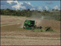 Cultivo de soja.Foto: Simón Chirgwin
