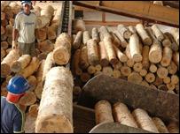 Explotaci�n de madera.Foto: Sim�n Chirgwin