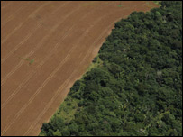 Deforestaci�n