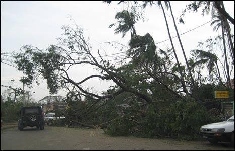 Uprooted tree in Rangoon