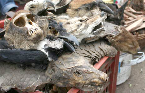 Skulls, vultures and dung