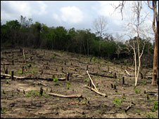 Burnt-out forest (Photo: Paul Harrison/Mpingo Conservation Project)