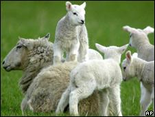 Generic lambs