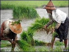 Burma rice farmers