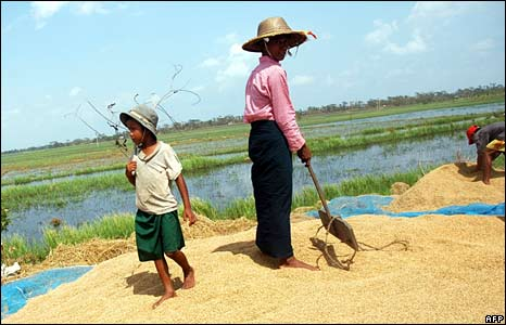 Cyclone-hit villagers dry their remaining rice in Bogalay on 8 May 2008