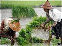 Agricultores birmanos
