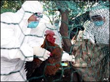 Men in bio suits prepare to slaughter chicken