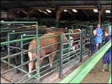 Darlington Cattle Market
