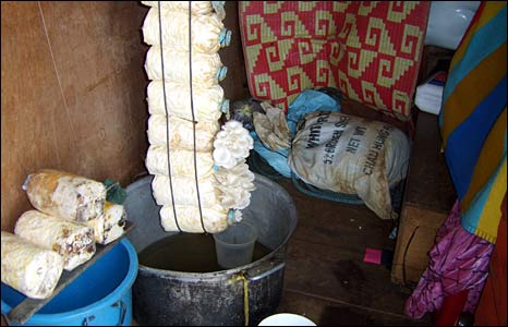 Mushrooms being cultivated by a resident in Preak Toal