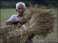 A worker collects wheat on the outskirts of Islamabad