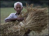 Recolección de trigo