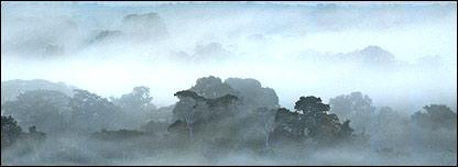 Selva de Surinam al amanecer