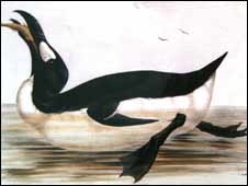 Great Auk painting