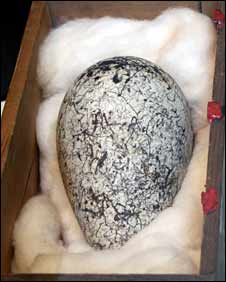 Great Auk egg
